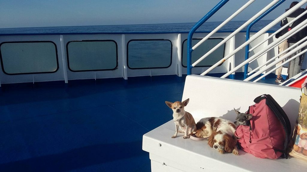 Traveling with our Chihuahua, Guide and Advices. Guides and Advices for Chihuahua Informations