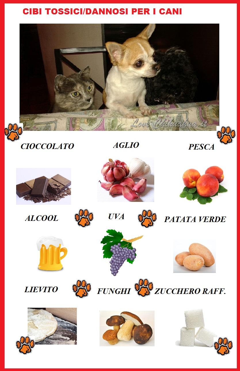 Toxic Dog Food Symptoms