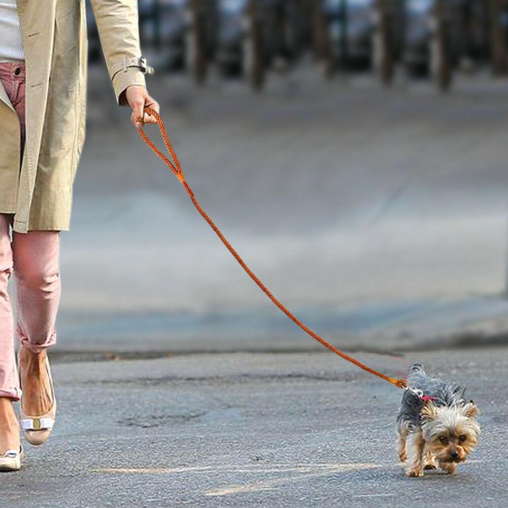 Small size dog walk leash pincher yorkshire chihuahua